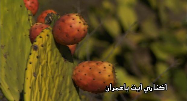 الإعلان عن الدورة الثانية لموسم أكناري بجماعة اسبويا – إقليم سيدي إفني